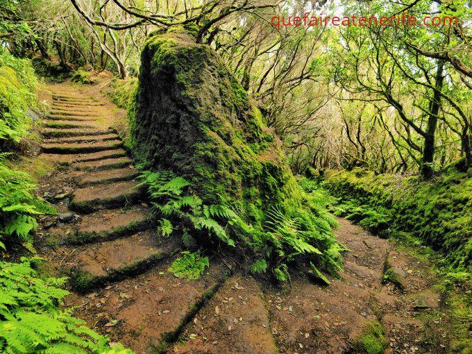 Chemin du parc d'Anaga à Tenerife